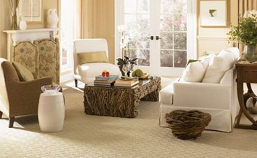 Carpets attract dust which allow certain pests to breed.