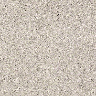 Shaw Carpet Dividing Line 15 19830 Tile Laminate Carpet